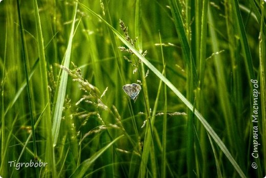 За что люблю макро, так за то, что много интересного можно найти в одной клумбе недалеко от дома =D фото 2