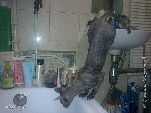 Доброе время суток....жители Страны...хочу показать вам свою любопытствующую красавишну....увидела...что в ванну набирают воду....да еще и  с пеной....вот это да....)))))))))))))) фото 2