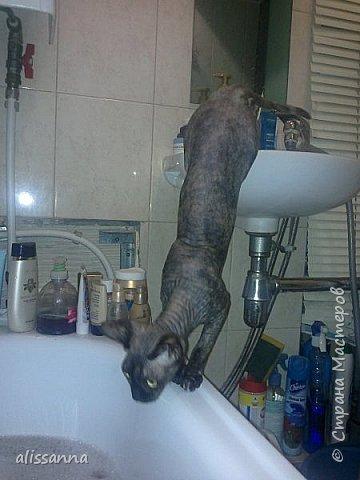 Доброе время суток....жители Страны...хочу показать вам свою любопытствующую красавишну....увидела...что в ванну набирают воду....да еще и  с пеной....вот это да....)))))))))))))) фото 3