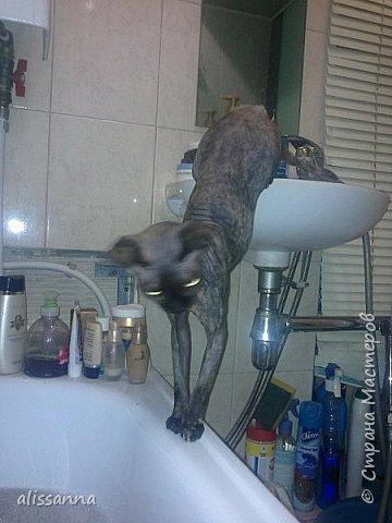 Доброе время суток....жители Страны...хочу показать вам свою любопытствующую красавишну....увидела...что в ванну набирают воду....да еще и  с пеной....вот это да....)))))))))))))) фото 4