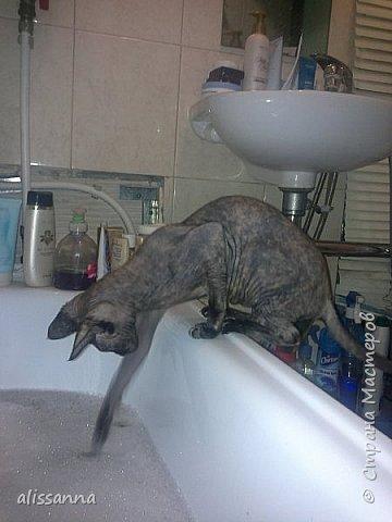 Доброе время суток....жители Страны...хочу показать вам свою любопытствующую красавишну....увидела...что в ванну набирают воду....да еще и  с пеной....вот это да....)))))))))))))) фото 6