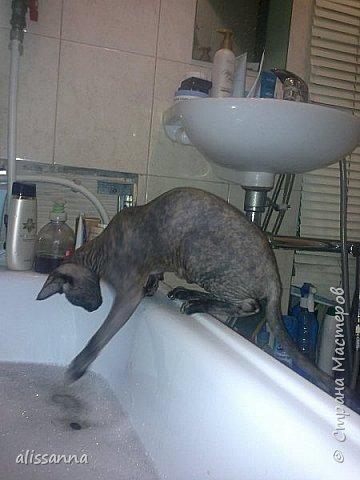 Доброе время суток....жители Страны...хочу показать вам свою любопытствующую красавишну....увидела...что в ванну набирают воду....да еще и  с пеной....вот это да....)))))))))))))) фото 7