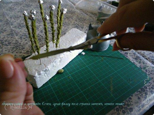 Здравствуйте всем заглянувшим. Лепила необычное растение, которое добавляют в букеты-брунию. Решила показать сам процесс, мини МК что ли. Я в первый раз, так что спрашивайте, что не ясно))) фото 5