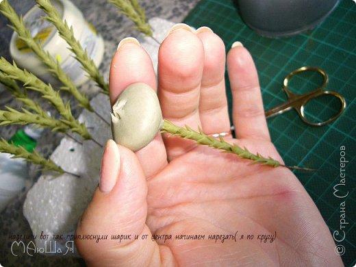 Здравствуйте всем заглянувшим. Лепила необычное растение, которое добавляют в букеты-брунию. Решила показать сам процесс, мини МК что ли. Я в первый раз, так что спрашивайте, что не ясно))) фото 7