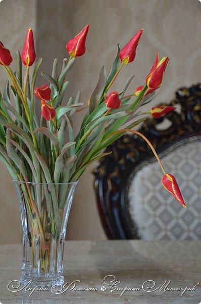 Такие маленькие тюльпаны, неизвестного мне сорта (бутон всего 5см в высоту) , мы увидели путешествуя по Франции, в одном из самых красивых мест Эльзаса, городе Оберне.  фото 3