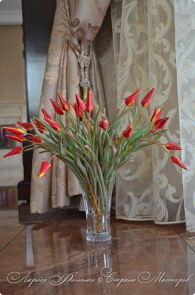 Такие маленькие тюльпаны, неизвестного мне сорта (бутон всего 5см в высоту) , мы увидели путешествуя по Франции, в одном из самых красивых мест Эльзаса, городе Оберне.  фото 4
