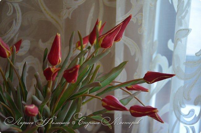 Такие маленькие тюльпаны, неизвестного мне сорта (бутон всего 5см в высоту) , мы увидели путешествуя по Франции, в одном из самых красивых мест Эльзаса, городе Оберне.  фото 5