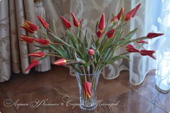 Такие маленькие тюльпаны, неизвестного мне сорта (бутон всего 5см в высоту) , мы увидели путешествуя по Франции, в одном из самых красивых мест Эльзаса, городе Оберне.  фото 2