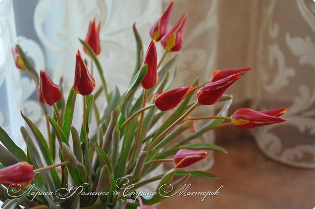 Такие маленькие тюльпаны, неизвестного мне сорта (бутон всего 5см в высоту) , мы увидели путешествуя по Франции, в одном из самых красивых мест Эльзаса, городе Оберне.  фото 1