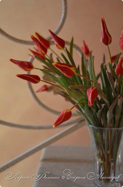Такие маленькие тюльпаны, неизвестного мне сорта (бутон всего 5см в высоту) , мы увидели путешествуя по Франции, в одном из самых красивых мест Эльзаса, городе Оберне.  фото 6