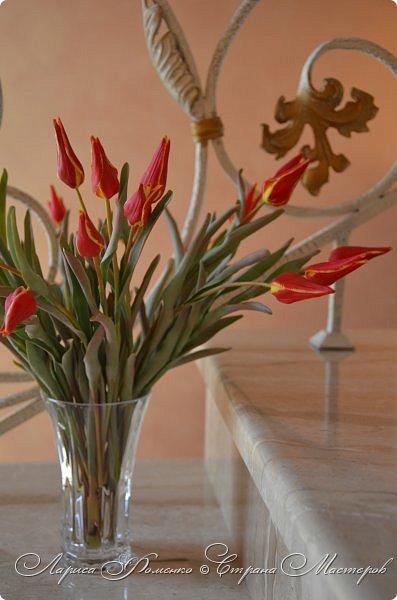 Такие маленькие тюльпаны, неизвестного мне сорта (бутон всего 5см в высоту) , мы увидели путешествуя по Франции, в одном из самых красивых мест Эльзаса, городе Оберне.  фото 7