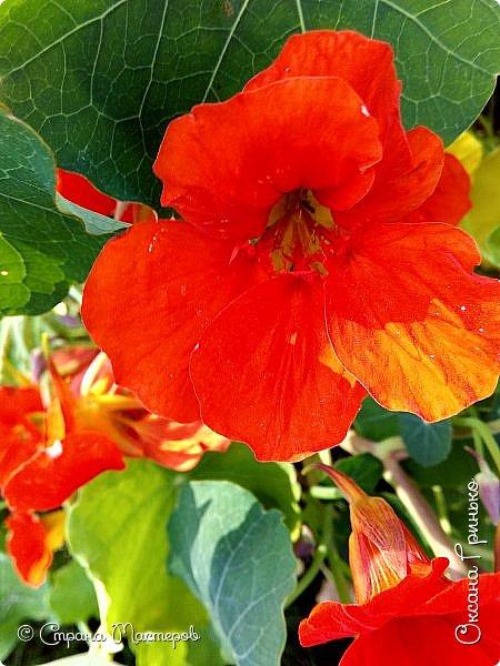 Добрый день Всем. Вот такие неприхотливые цветочки расцвели и радуют взгляд. фото 7