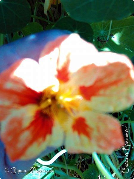 Добрый день Всем. Вот такие неприхотливые цветочки расцвели и радуют взгляд. фото 8