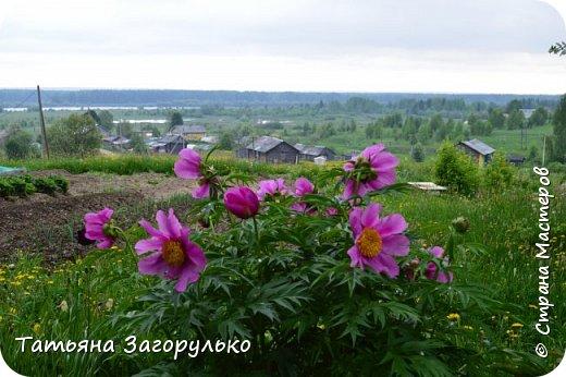 А вот с этого и начнем! ))) Тазики - ведра - тазики - ведра.... Это июль! Это клубника! )))  фото 8