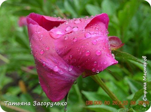 А вот с этого и начнем! ))) Тазики - ведра - тазики - ведра.... Это июль! Это клубника! )))  фото 18