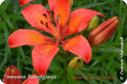 А вот с этого и начнем! ))) Тазики - ведра - тазики - ведра.... Это июль! Это клубника! )))  фото 24