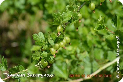 А вот с этого и начнем! ))) Тазики - ведра - тазики - ведра.... Это июль! Это клубника! )))  фото 5