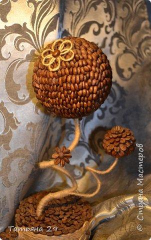 Моё первое кофейное деревце. фото 4