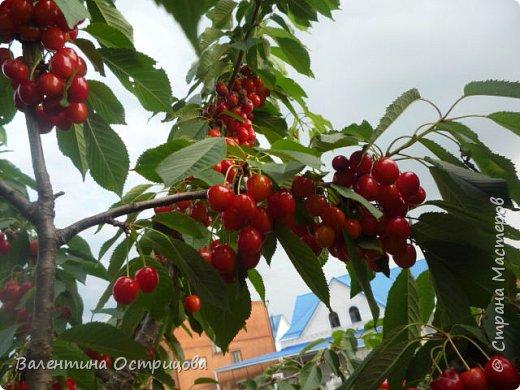 Добрый  день  или  вечер , дорогие  мастера  и  мастерицы  нашей  прекрасной  СМ  !!  И , как  продолжение  летних  даров  , хочу  показать  наши  овощи, фрукты  и  другие  плоды , которые  нам  подарило  это  лето .  Вверху  снимка  -  круглые , не  совсем  обычные , баклажаны .   Внизу  снимка -  некоторые  сорта  томатов . фото 16