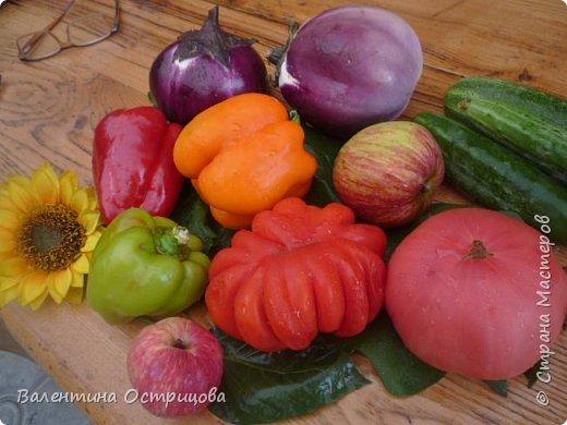 Добрый  день  или  вечер , дорогие  мастера  и  мастерицы  нашей  прекрасной  СМ  !!  И , как  продолжение  летних  даров  , хочу  показать  наши  овощи, фрукты  и  другие  плоды , которые  нам  подарило  это  лето .  Вверху  снимка  -  круглые , не  совсем  обычные , баклажаны .   Внизу  снимка -  некоторые  сорта  томатов . фото 1