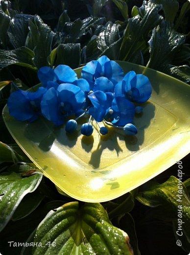 Здравствуй Страна Мастеров и Мастериц!!!!! Давненько я сюда не захаживала..... Вот опять у меня  орхидея созрела.... и опять голубая!  Спросом пользуется. Дарю .... Лепила на даче, т к живу там  с внуком вожусь... Вечернее время в моем распоряжении, поэтому извиняйте за качество фото.... фото 3
