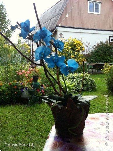 Здравствуй Страна Мастеров и Мастериц!!!!! Давненько я сюда не захаживала..... Вот опять у меня  орхидея созрела.... и опять голубая!  Спросом пользуется. Дарю .... Лепила на даче, т к живу там  с внуком вожусь... Вечернее время в моем распоряжении, поэтому извиняйте за качество фото.... фото 9