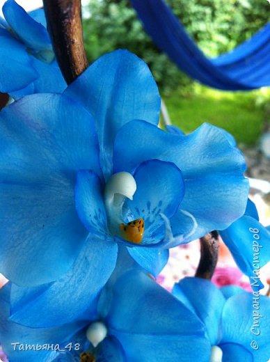 Здравствуй Страна Мастеров и Мастериц!!!!! Давненько я сюда не захаживала..... Вот опять у меня  орхидея созрела.... и опять голубая!  Спросом пользуется. Дарю .... Лепила на даче, т к живу там  с внуком вожусь... Вечернее время в моем распоряжении, поэтому извиняйте за качество фото.... фото 12