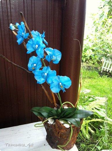 Здравствуй Страна Мастеров и Мастериц!!!!! Давненько я сюда не захаживала..... Вот опять у меня  орхидея созрела.... и опять голубая!  Спросом пользуется. Дарю .... Лепила на даче, т к живу там  с внуком вожусь... Вечернее время в моем распоряжении, поэтому извиняйте за качество фото.... фото 4
