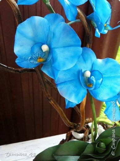 Здравствуй Страна Мастеров и Мастериц!!!!! Давненько я сюда не захаживала..... Вот опять у меня  орхидея созрела.... и опять голубая!  Спросом пользуется. Дарю .... Лепила на даче, т к живу там  с внуком вожусь... Вечернее время в моем распоряжении, поэтому извиняйте за качество фото.... фото 7
