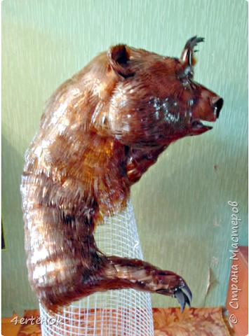 Медведь фото 12