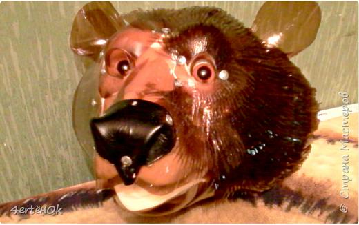 Медведь фото 7