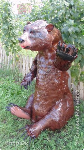 Медведь фото 1