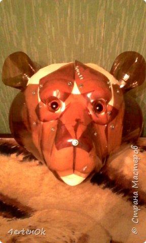 Медведь фото 5