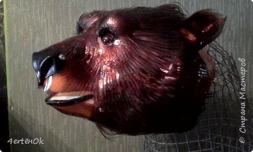 Медведь фото 9