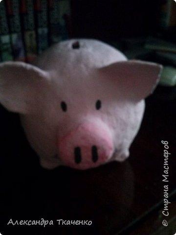 Моя милая и любимая свинюшечка))) фото 5