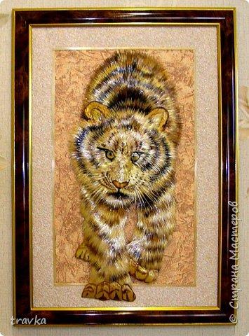 Тигр. фото 1