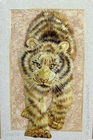 Тигр. фото 2