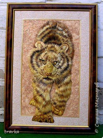 Тигр. фото 3