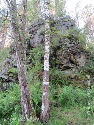 """Эту сказочную картину можно увидеть на горе Синюха в республике Алтай. А побывали мы здесь благодаря проведённой в Горном Алтае выставке """"Живая планета"""". фото 15"""