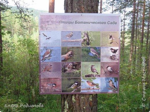 """Эту сказочную картину можно увидеть на горе Синюха в республике Алтай. А побывали мы здесь благодаря проведённой в Горном Алтае выставке """"Живая планета"""". фото 16"""