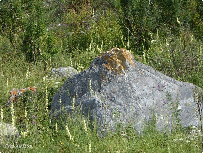 Итак, следуя по Чемальскому тракту, в ходе обзорной экскурсии был предложен для просмотра очень интересный (загадочный!!!) горный объект - огромный валун, застрявший в ущелье. И зовется этот камень Баатыр-Таш, что в переводе означает Богатырь-камень. фото 15
