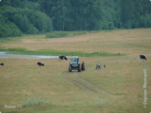 Моя деревня пахнет многим, многим, Все запахи ее не посчитать. Когда я уставал с большой дороги, Деревнею хотелось подышать. ... Вот летний зной душистой пахнет мятой, и запах чабреца идёт с полей.  (П. Черных)  фото 28