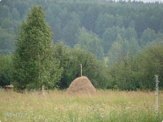 Моя деревня пахнет многим, многим, Все запахи ее не посчитать. Когда я уставал с большой дороги, Деревнею хотелось подышать. ... Вот летний зной душистой пахнет мятой, и запах чабреца идёт с полей.  (П. Черных)  фото 36