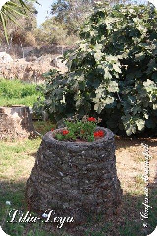 Летом этого года я отдыхала на Кипре. Логичнее написать: мучилась! Потому что более ужасной добровольной пытки трудно испытать(                                                                                                                                                     Лишь вернувшись домой, вычитала, что в июле-августе не рекомендуется посещать эту страну! Не палящее, а испепеляющее солнце при влажности воздуха 86%! Купальнику не хватало трех суток чтобы полностью высохнуть. фото 44