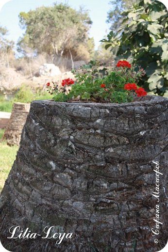 Летом этого года я отдыхала на Кипре. Логичнее написать: мучилась! Потому что более ужасной добровольной пытки трудно испытать(                                                                                                                                                     Лишь вернувшись домой, вычитала, что в июле-августе не рекомендуется посещать эту страну! Не палящее, а испепеляющее солнце при влажности воздуха 86%! Купальнику не хватало трех суток чтобы полностью высохнуть. фото 45