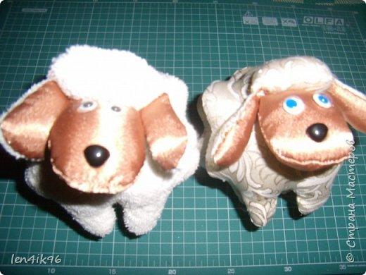 Котики и  овечки фото 2