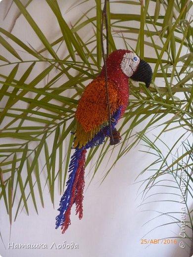 Большой попугай из бисера на каркасе фото 2