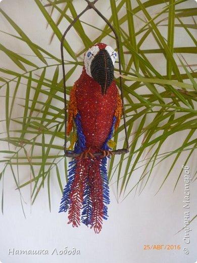Большой попугай из бисера на каркасе фото 3