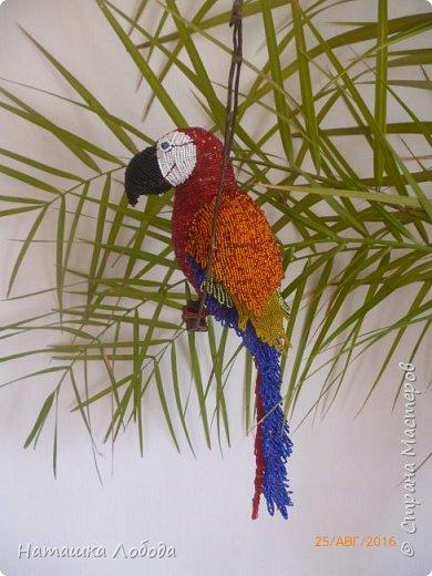 Большой попугай из бисера на каркасе фото 4