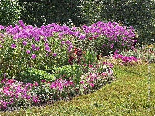 Всем моим гостям хорошего настроения! Хочу вам его, хорошего настроения, добавить. Сейчас, в конце лета, хочу показать вам свои цветники.  Что-то уже было  в моих записях. Но так хочется похвалиться тем, что сделано. Те, кто любит дачи с асфальтированными дорожками, коллекционными цветами  и красивыми садовыми фигурками, должны остановиться здесь и не смотреть  дальше. Я показываю обычный деревенский двор, с белёным домом, старыми хозяйственными постройками и самыми обычными цветами. Хочу, чтобы мои гости посмотрели, что и огромный старый деревенский двор можно сделать красивым. фото 3